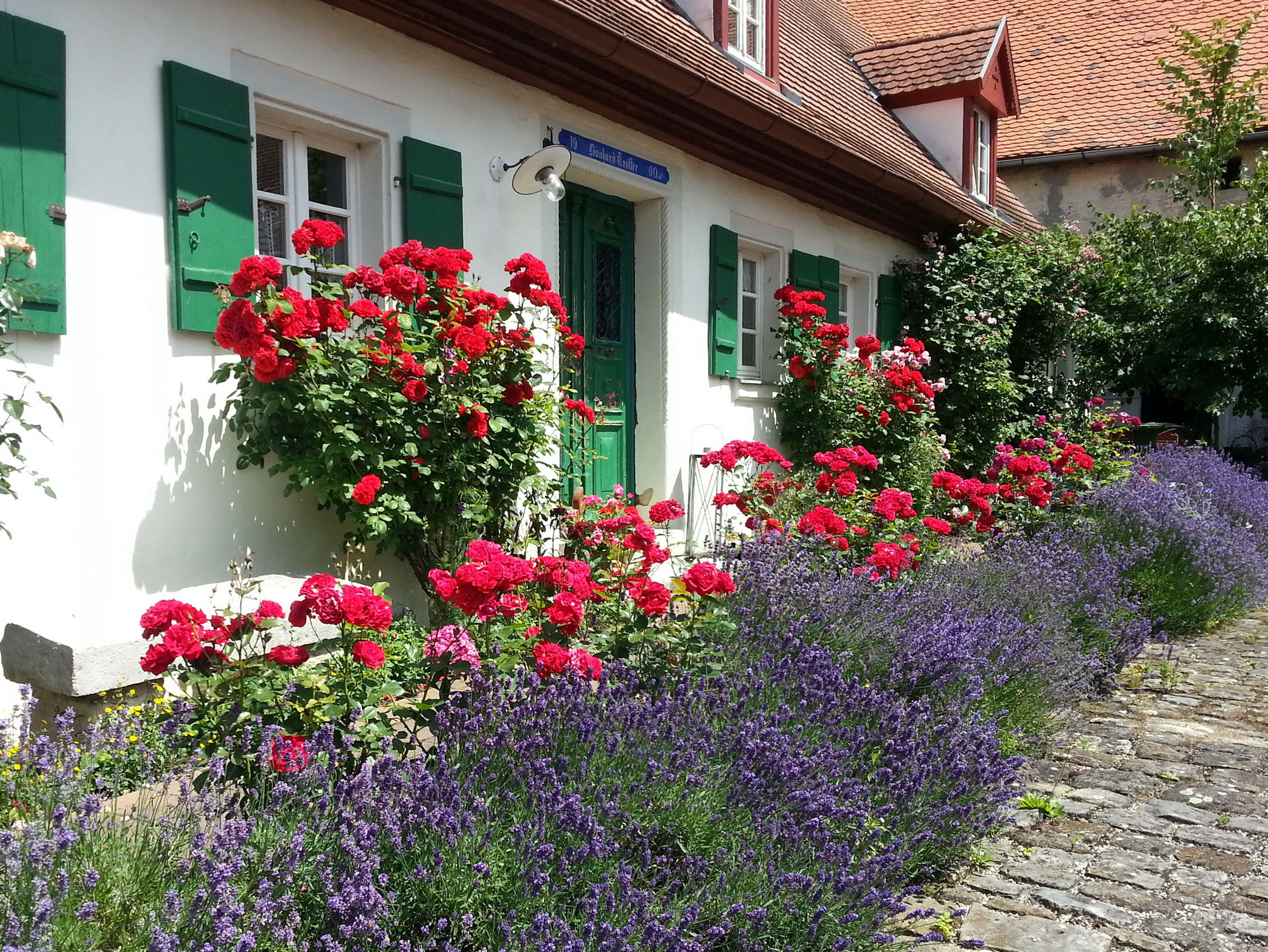 Kombination von roten und pinkfarbenen Blüten mit lila Lavendel