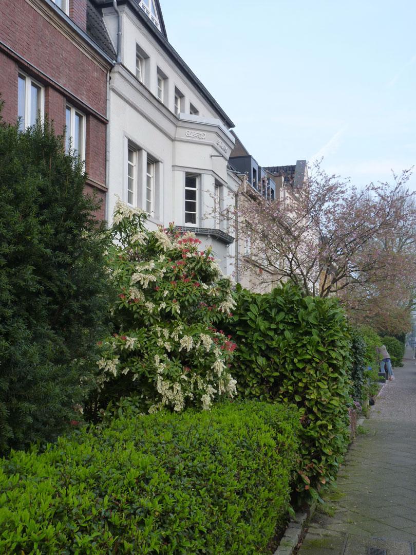 Straße mit begrünten Vorgärten