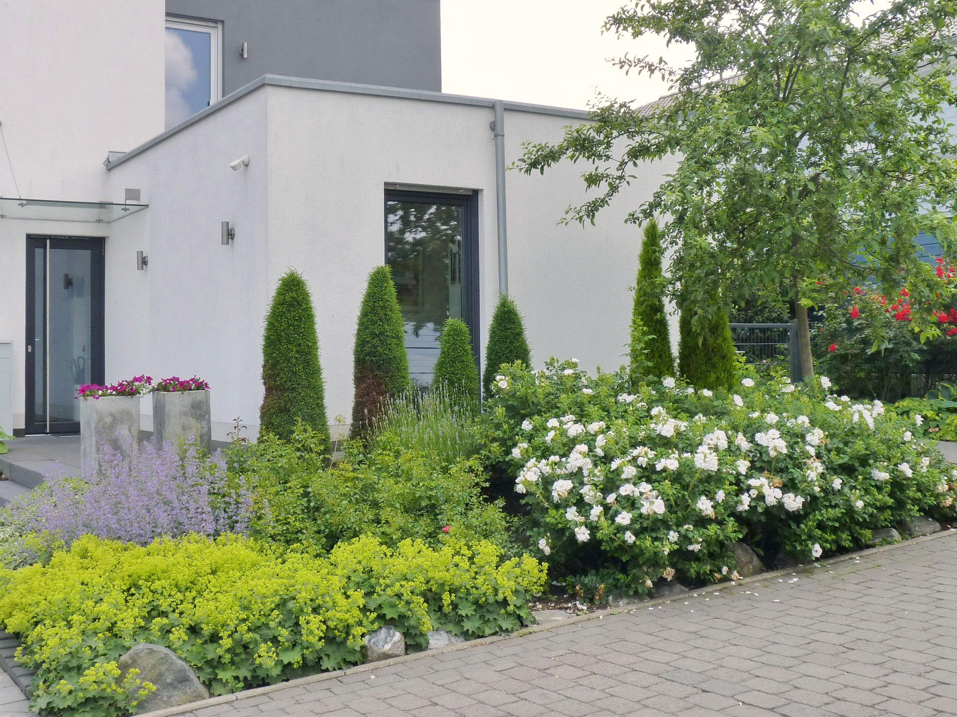 Pflanzen im Vorgarten