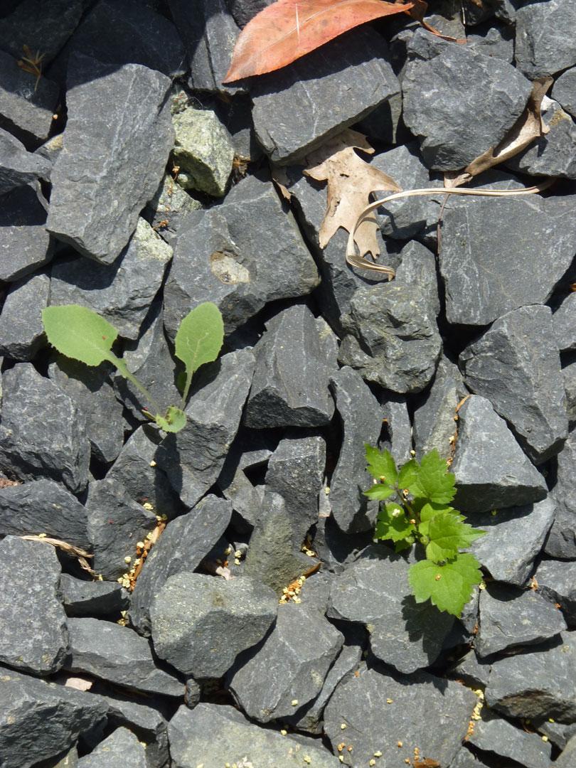 Steine und Split