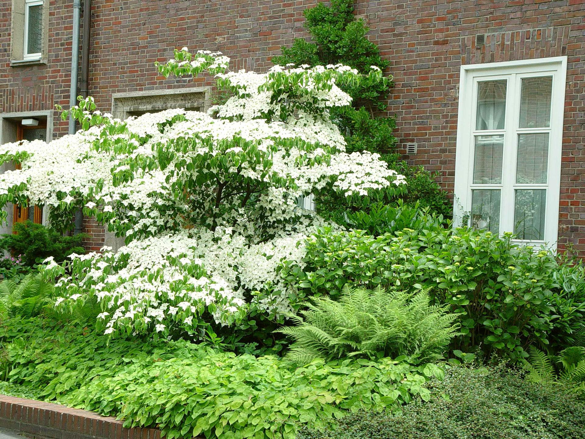 Pflanzen, die auch auf der Nordseite gut wachsen
