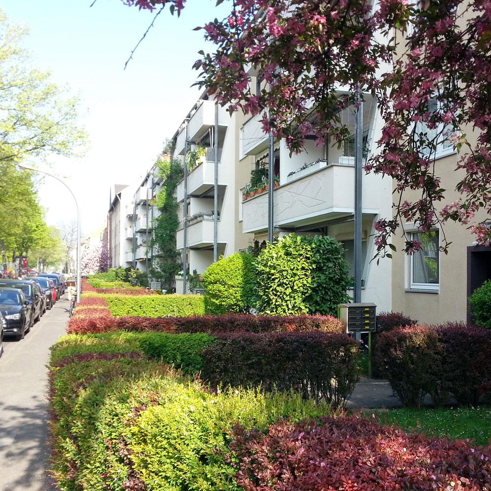 Eine Straße mit begrünten Vorgärten